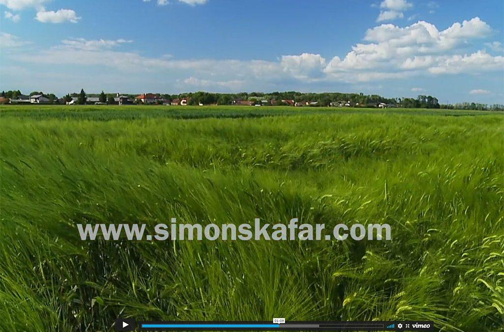 Simon Škafar, Creative video